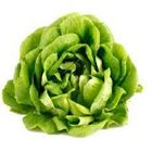 Picture of ORGANIC BUTTER LETTUCE